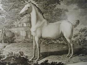 Condé - skelettet af Alte Fritz's hest og andre berømte krikker