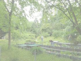Aboretum - En fest for træmænd