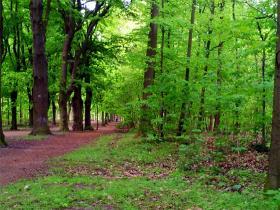 Skovmuseet - Naturen omkring Berlin